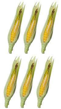 Dollhouse Miniature Corn, 6 Pc